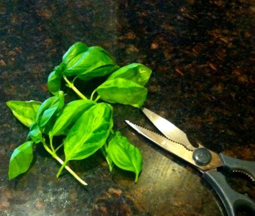Fresh Cut Basil