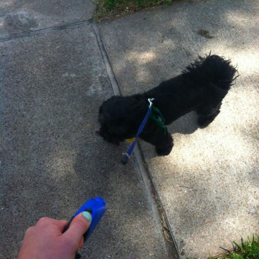 Watson's Walk
