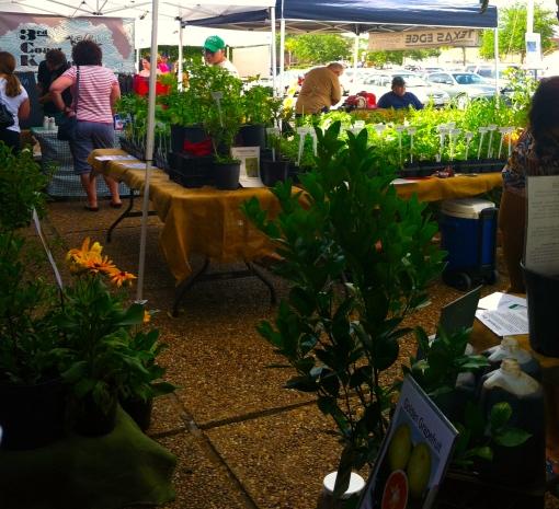 Farmer's Market #2