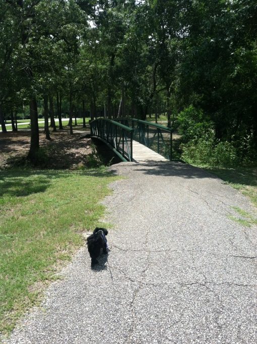 walking the dog--Journey for Jessi